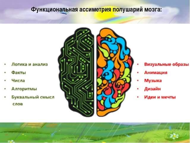 Функциональность головного мозга
