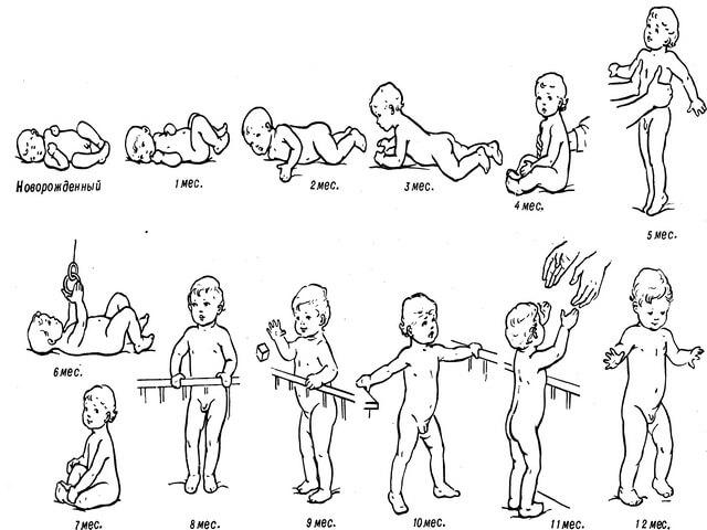 Картинка этапы развития ребенка