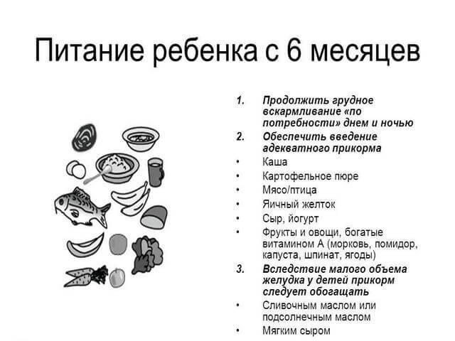 Особенности кормления полугодовасика