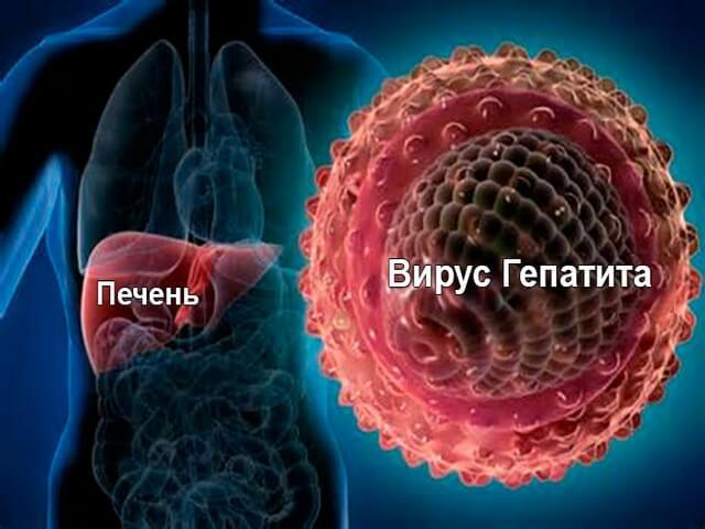 Бактерия в печени