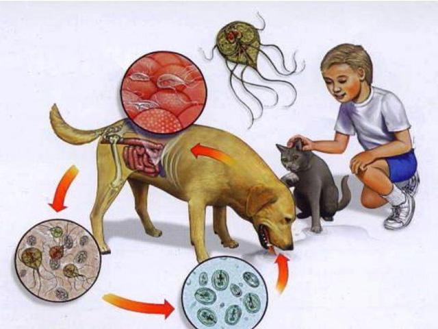 Как передаются паразиты